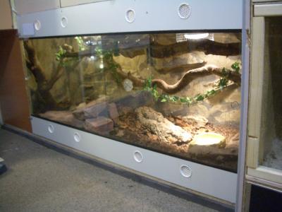 andy 39 s terrarium die eschelbronner schlangenseite. Black Bedroom Furniture Sets. Home Design Ideas
